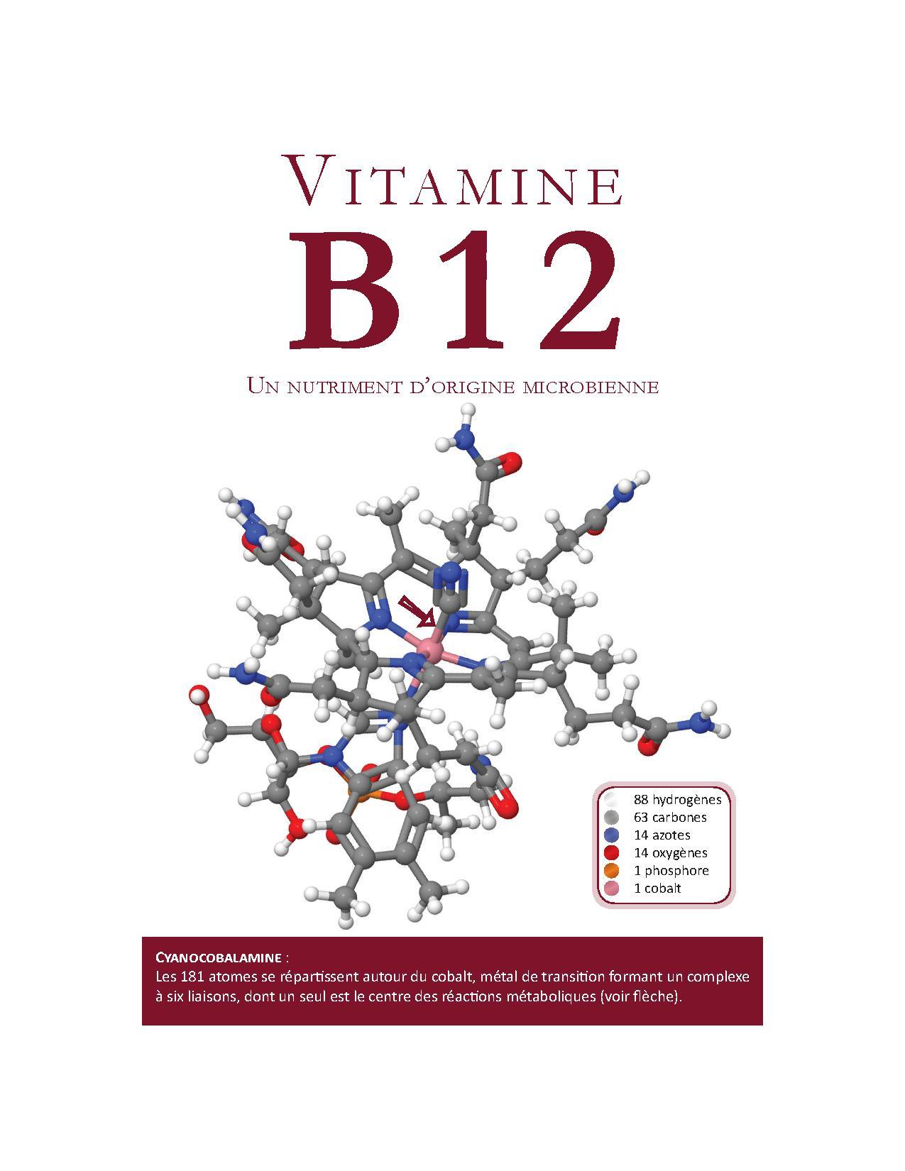 Brochure sur la vitamine B12 pour les professionnels de la santé
